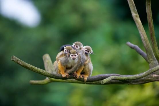 Olmense Zoo Foto's